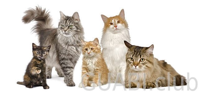 bigstockphoto_group_of__cats_in_a_row__nor_5081821